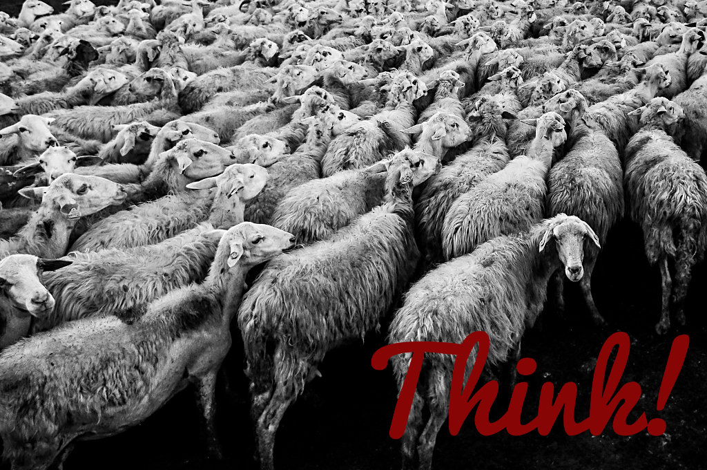 Think Sheep, Think!